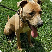 Adopt A Pet :: Yukon - Salem, MA