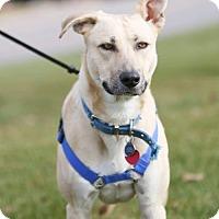 Adopt A Pet :: Shasta - Princeton, MN