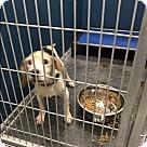 Adopt A Pet :: Courage