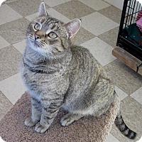 Adopt A Pet :: Brett - Glenwood, MN
