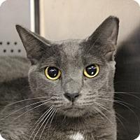 Adopt A Pet :: Flynn - Sarasota, FL