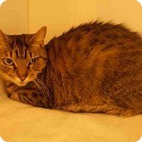 Adopt A Pet :: CRYSTAL - Upper Marlboro, MD