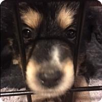 Adopt A Pet :: PILOT INSPECKTOR - Glendale, AZ