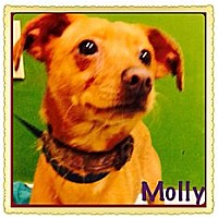 Adopt A Pet :: Molly - Los Angeles, CA