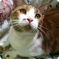 Adopt A Pet :: Nala - Fremont, OH
