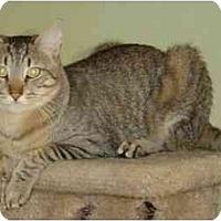 Adopt A Pet :: Clem - Elk Grove, CA