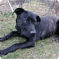 Adopt A Pet :: Betty Brindle - Kansas City, MO