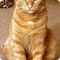 Adopt A Pet :: Ginny - Alexandria, VA