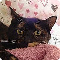 Adopt A Pet :: Kallie - Albany, NY