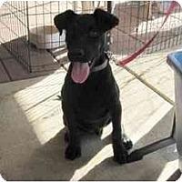 Adopt A Pet :: Gator - Alexandria, VA