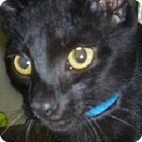 Adopt A Pet :: Halbert - Hamburg, NY