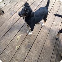 Adopt A Pet :: Calvin & Wilson - Fair Oaks Ranch, TX