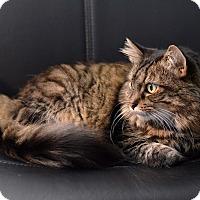 Adopt A Pet :: Mewny - St. Louis, MO