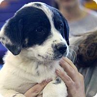 Adopt A Pet :: Scott~ meet me! - Glastonbury, CT