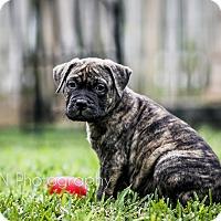 Adopt A Pet :: Derek - Miami, FL