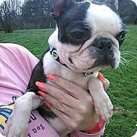 Adopt A Pet :: Maui - Cumberland, MD