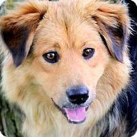 Adopt A Pet :: MICKEY(GENTLE-KIND-SO LOVING! - Wakefield, RI