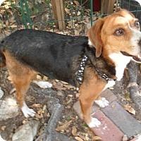 Adopt A Pet :: Lexi - Umatilla, FL