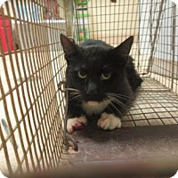 Adopt A Pet :: Sperry - Cumming, GA