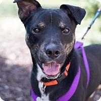 Adopt A Pet :: Bernie - Grand Rapids, MI