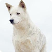 Adopt A Pet :: A - ARCTIC - Columbus, OH