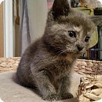 Adopt A Pet :: Tamara - Sparta, NJ