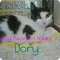 Adopt A Pet :: Dory - Hamilton, ON