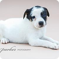 Adopt A Pet :: Tekken - Marietta, GA