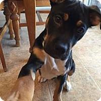 Adopt A Pet :: Zuko - Denver, CO