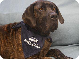 Mastiff/Great Dane Mix Dog for adoption in Republic, Washington - Daisy