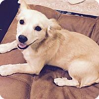 Adopt A Pet :: Piper - Monrovia, CA