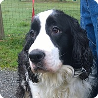 Adopt A Pet :: Sonny - Seattle c/o Kingston 98346/ Washington State, WA