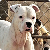 Adopt A Pet :: Trevor - San Tan Valley, AZ