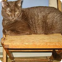 Adopt A Pet :: Bernadette - Colmar, PA