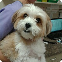 Small Dogs Up For Adoption In Ct