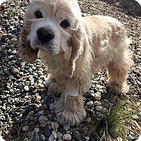 Adopt A Pet :: Lady-ADOPTED! - Sacramento, CA