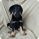 Adopt A Pet :: Alex meet me 2/24
