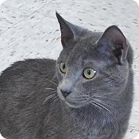 Adopt A Pet :: Slim - Chambersburg, PA
