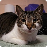 Adopt A Pet :: Honey Dew - New Milford, CT