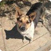 Adopt A Pet :: Darcy - Atascadero, CA