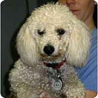Adopt A Pet :: Quincy - Kingwood, TX
