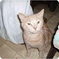 Adopt A Pet :: Sammi - Hamburg, NY