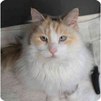 Adopt A Pet :: Roxanne - Keizer, OR
