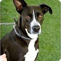 Adopt A Pet :: Phoenix - Mission Viejo, CA