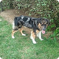 Adopt A Pet :: Roscoe - Washington, IL