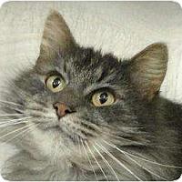 Adopt A Pet :: Little Dee - Howell, NJ