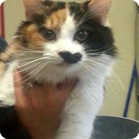 Adopt A Pet :: Calista - Monroe, GA