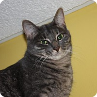 Adopt A Pet :: Maxine (LE) - Little Falls, NJ