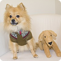 Adopt A Pet :: Mozzie - conroe, TX