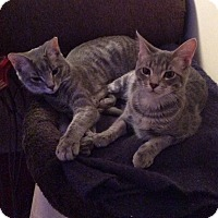 Adopt A Pet :: Toby & Tobias - Temple, PA